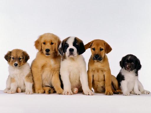 ¡Aceptamos mascotas!