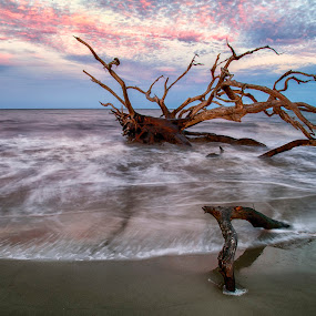 Sunset Jekyll Island Point by George Holt - Landscapes Beaches ( sand, driftwood, waterscape, oceanscape, waves, sunset, ocean waves, ocean, long exposure, beach,  )