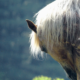 Buddy's Morning by Mary Gerakaris - Animals Horses ( horse portrait, farm animals, horses, therapeutic riding, early morning on a farm, equestrian photography )