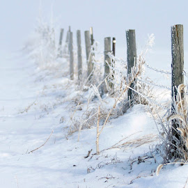 Fence  by Lorri Nussbaum - Artistic Objects Other Objects ( field, fence, winter, dried, fog, grass, snow, frozen )