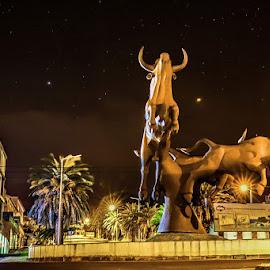 Bulls want the stars by Pedro Vaz de Carvalho - Buildings & Architecture Statues & Monuments