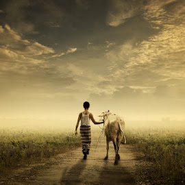 Menuntun Pulang by Ipoenk Graphic - Digital Art People ( walking, cow, landscape, man )