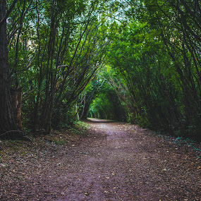 Paths Less Traveled by Andrew Ng - Landscapes Forests ( river valley, forest, running trails, edmonton, trails, tree canopy )
