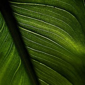 detailed leaf by Magdalena Wysoczanska - Abstract Macro