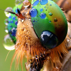 BenQ Shot by Iwan Ramawan - Animals Insects & Spiders