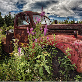 Red Truck and Flowers by Raquel Gonzalez - Transportation Automobiles ( hdr, blue skies, old cars )