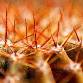Thorns!! by Arnab Choudhury - Nature Up Close Gardens & Produce
