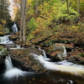 Autumn Below Ozone Falls by Tim Devine - Landscapes Waterscapes ( falls trail, stream, autumn, kitchen creek, glen leigh, ozone falls, pennsylvania, creak, ricketts glen state park )