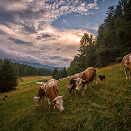 Juicy grass by Stanislav Horacek - Landscapes Prairies, Meadows & Fields