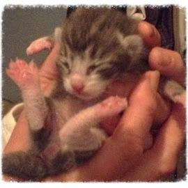 New Kitten by Dorathy Mckay - Animals - Cats Kittens