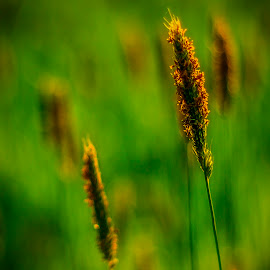 Summer heat by Martin Jahn - Nature Up Close Leaves & Grasses ( orange, grass, green, meadow, summer )