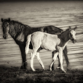 by Dobrinovphotography Dobrinov - Animals Horses
