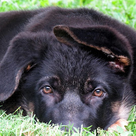 by Jacki Potter Rich - Animals - Dogs Puppies