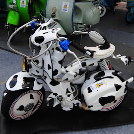 Dalmatianz Mini Vespa Custom  by Djayen Ade Liong - Transportation Motorcycles (  )