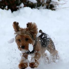 It's chilly by Kim Davis - Animals - Dogs Running