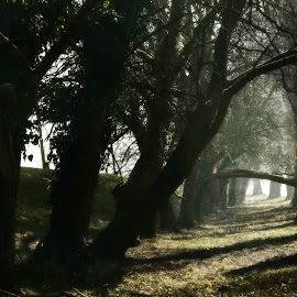 Čarolijommm by Andrea Šipuš - Nature Up Close Trees & Bushes (  )