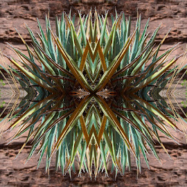 Desert Plant by Shane Egan - Abstract Patterns ( abstract, patterns, nature, desert plant )