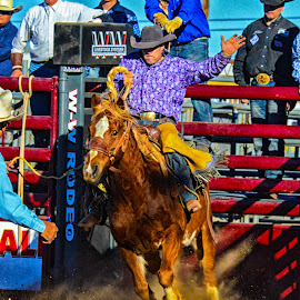 Out of the chute by Joe Thomas - Animals Horses ( ride, cowboy, horse, rodeo, bronco )