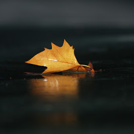 Alone on the rain by Sofia Abrantes - Abstract Macro ( outono, leave, autumn, night, leaves, portrait, rain )