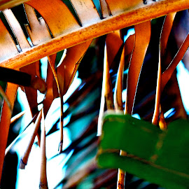 palm leaf at its end by Magdalena Wysoczanska - Nature Up Close Leaves & Grasses ( palm, dry, nature, colorful, leaf, dead )