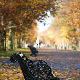 London by Gabriela Lupu - City,  Street & Park  City Parks ( uk, park, london, bench, fall, public, furniture, object )