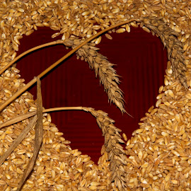 heart of wheat by Yordanka Trifonova - Food & Drink Cooking & Baking ( raw, recipe, diet, crop, heap, farm, nature, bread, pile, cooking, vegetarian, ingredient, baking, bunch, meal, wheat, cook, heart, seed, white, agriculture, growing, health, board, farming, rural, cereal, handful, groats, nutrition, organic, dietary, red, frame, food, grow, background, grain, healthy, summer, eat, brown, harvest, natural )