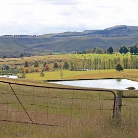 landscape by Dirk Luus - Landscapes Prairies, Meadows & Fields ( autumn, fall, trees, landscape, fields, color, colorful, nature )