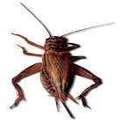 Cricket Sound Effects icon