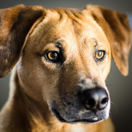 by Michael Last - Animals - Dogs Portraits ( #GARYFONGPETS, #SHOWUSYOURPETS )