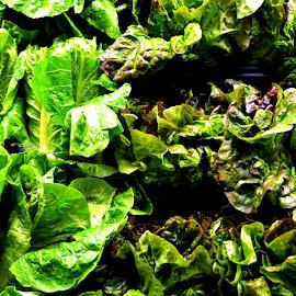 Fresh Greens by Rhonda Rossi - Food & Drink Fruits & Vegetables (  )