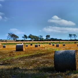 Hay bales by Nic Scott - Landscapes Prairies, Meadows & Fields ( field, hay bales, hay, fields )