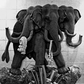 AIRAVATA ::: ERAWAN wall carving by Daniel Legendarymagic - Black & White Objects & Still Life ( erawan, elephant, thailand, carving, airavata, holy, digicore, hinduism, bangkok, dcp, buddhism, deity, blessing, legendarymagic, wall )