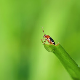 Waiting... by Ferdy Zilo - Animals Insects & Spiders