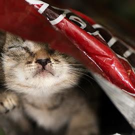 Smoki by Sead Kazija - Animals - Cats Kittens