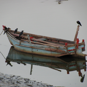 Lonely Boat by Shishir Desai - Transportation Boats ( reflection, blue, crow, boat, water, device, transportation )