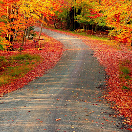 Fall Road by GPictoria -Gopu's Photography - Landscapes Forests ( nature, color, fall road, beauty, landscape )