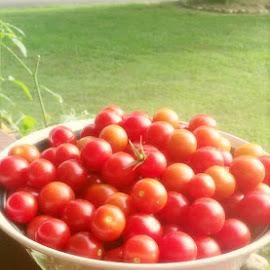 Harvest Time by Jennifer Tunnell - Food & Drink Fruits & Vegetables ( summer )