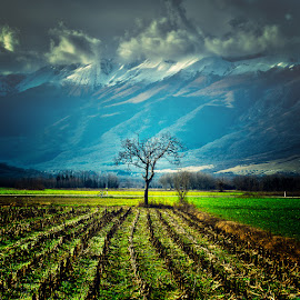 Solo tree by Luigi Esposito - Landscapes Prairies, Meadows & Fields ( clouds, mountains, sky, tree, grass, plants )