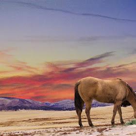 super caballo-1234.jpg