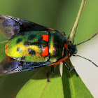 Jewel bug wing display