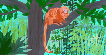 Golden Tamarin