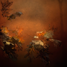 When the leaves start to fall by Gianni Fontana - Nature Up Close Leaves & Grasses ( fineart, autumn, fine art photography, fine art, leaves,  )