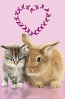 Screenshot of Cat and Bunny. Cute Wallpaper.