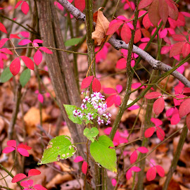 Wild Flower in the Red Leaves by Pat Lasley - City,  Street & Park  City Parks ( fall colors challenge, challenge, fall colors, autumn, leaves, fall, color, colorful, nature )