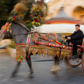 by Sophia Gimigliano - Transportation Other