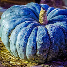 Blue Pumpkin  by Leah N - Nature Up Close Gardens & Produce