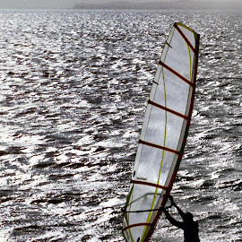 Wind Surfer by Darrell Evans - Sports & Fitness Watersports ( water, wind surfer, sport, sea, sail, board, man )