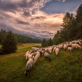 Grazing and going by Stanislav Horacek - Landscapes Prairies, Meadows & Fields