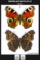 Screenshot of Atlas of Czech Butterflies