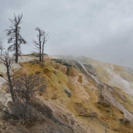 Yellowstone and the black bones of trees by Brian  Boyle - Landscapes Travel ( photograph, thermal, brian boyle, forest, landscape, photography, pyroclastic, yellowstone, national park, geyser, cauldron, mineral, blackened, geothermal, photographer, trees, bb, black, yukonbrianboyle )